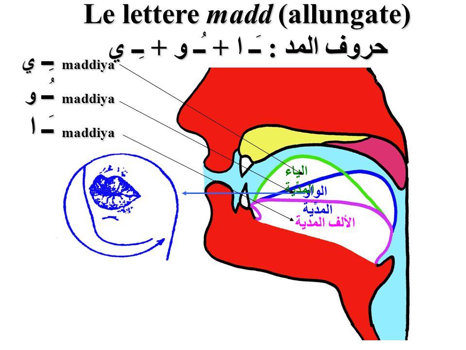 Le lettere madd (allungate) حروف المد : ـَـ ا + ـُـ و + ـِـ ي الألف المدية الواو المدِّية الياء المدِّية maddiya ـِـ ي maddiya ـِـ ي maddiya ـُـ و mad