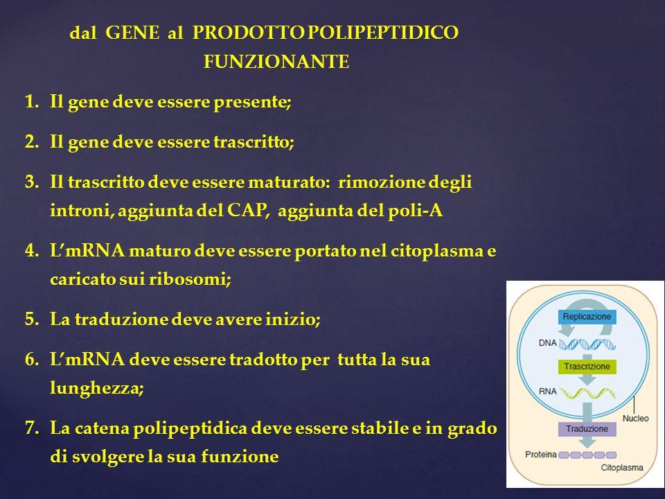 dal GENE al PRODOTTO POLIPEPTIDICO FUNZIONANTE 1.Il gene deve essere presente; 2.Il gene deve essere trascritto; 3.Il trascritto deve essere maturato: rimozione degli introni, aggiunta del CAP, aggiunta del poli-A 4.L'mRNA maturo deve essere portato nel citoplasma e caricato sui ribosomi; 5.La traduzione deve avere inizio; 6.L'mRNA deve essere tradotto per tutta la sua lunghezza; 7.La catena polipeptidica deve essere stabile e in grado di svolgere la sua funzione