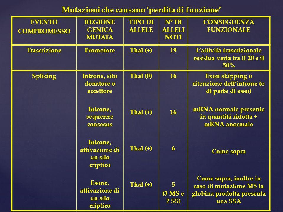 EVENTO COMPROMESSO REGIONE GENICA MUTATA TIPO DI ALLELE N° DI ALLELI NOTI CONSEGUENZA FUNZIONALE TrascrizionePromotoreThal (+)19L'attività trascrizionale residua varia tra il 20 e il 50% SplicingIntrone, sito donatore o accettore Introne, sequenze consesus Introne, attivazione di un sito criptico Esone, attivazione di un sito criptico Thal (0) Thal (+) 16 6 5 (3 MS e 2 SS) Exon skipping o ritenzione dell'introne (o di parte di esso) mRNA normale presente in quantità ridotta + mRNA anormale Come sopra Come sopra, inoltre in caso di mutazione MS la globina prodotta presenta una SSA Mutazioni che causano 'perdita di funzione'
