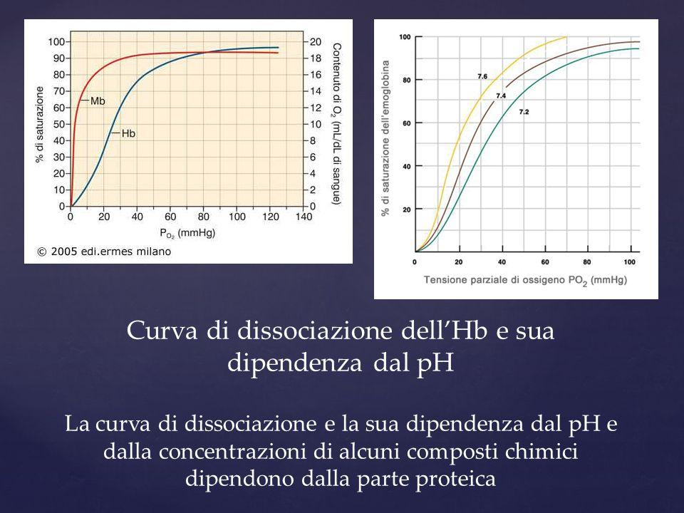 Curva di dissociazione dell'Hb e sua dipendenza dal pH La curva di dissociazione e la sua dipendenza dal pH e dalla concentrazioni di alcuni composti chimici dipendono dalla parte proteica