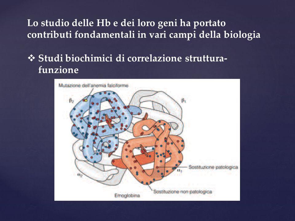 Lo studio delle Hb e dei loro geni ha portato contributi fondamentali in vari campi della biologia  Studi biochimici di correlazione struttura- funzione