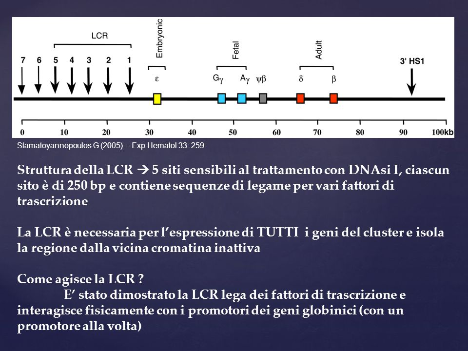 Struttura della LCR  5 siti sensibili al trattamento con DNAsi I, ciascun sito è di 250 bp e contiene sequenze di legame per vari fattori di trascrizione La LCR è necessaria per l'espressione di TUTTI i geni del cluster e isola la regione dalla vicina cromatina inattiva Come agisce la LCR .