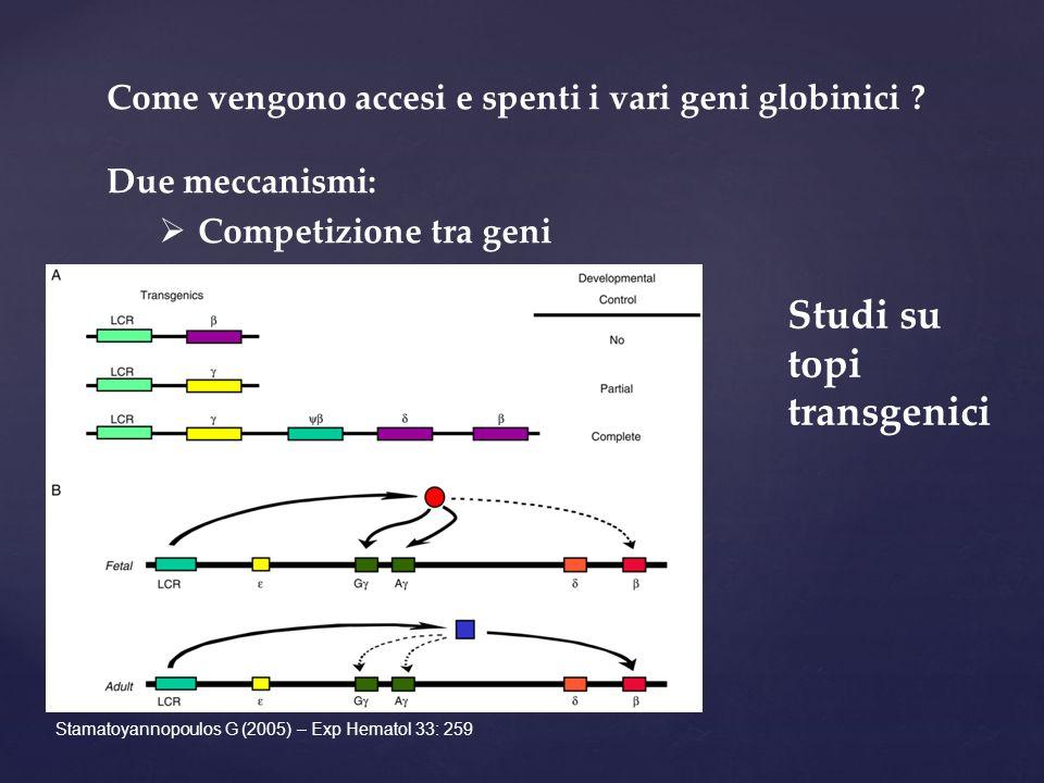 Come vengono accesi e spenti i vari geni globinici .