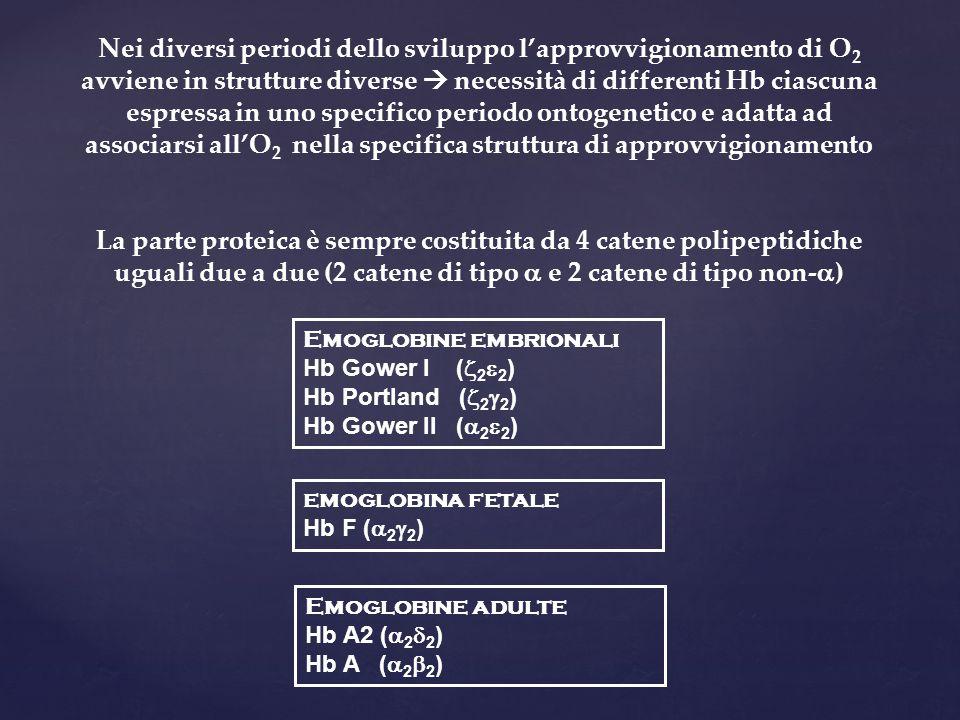 Nei diversi periodi dello sviluppo l'approvvigionamento di O 2 avviene in strutture diverse  necessità di differenti Hb ciascuna espressa in uno specifico periodo ontogenetico e adatta ad associarsi all'O 2 nella specifica struttura di approvvigionamento La parte proteica è sempre costituita da 4 catene polipeptidiche uguali due a due (2 catene di tipo  e 2 catene di tipo non-  ) Emoglobine embrionali Hb Gower I (  2  2 ) Hb Portland (  2  2 ) Hb Gower II (  2  2 ) emoglobina fetale Hb F (  2  2 ) Emoglobine adulte Hb A2 (  2  2 ) Hb A (  2  2 )