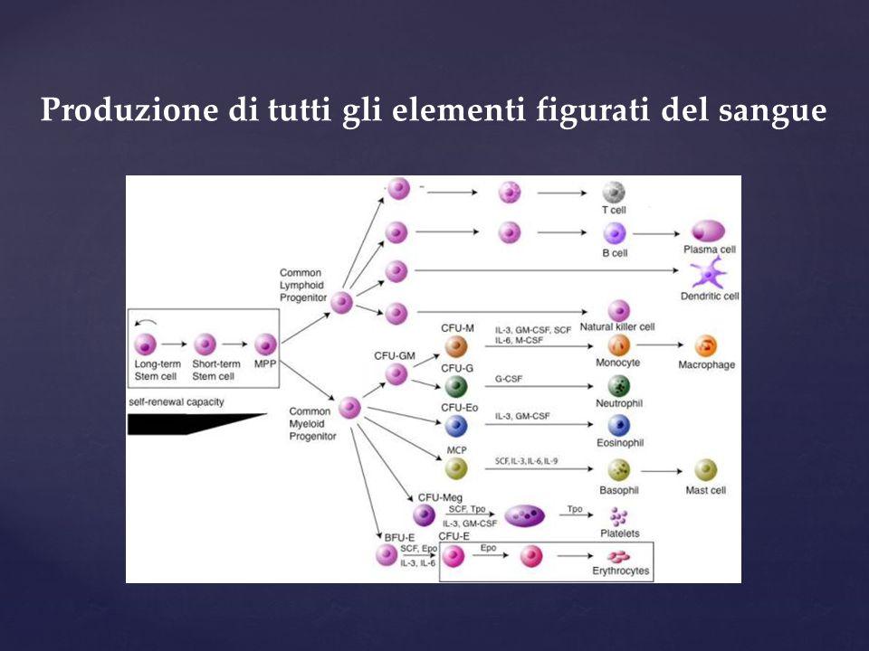 Lo switch feto  adulto è dovuto a uno switch del programma trascrizionale delle cellule progenitrici e non ad uno switch nell'attivazione di popolazioni staminali diverse L'eritropoiesi ricapitola l'ontogenesi Stamatoyannopoulos G (2005) – Exp Hematol 33: 259