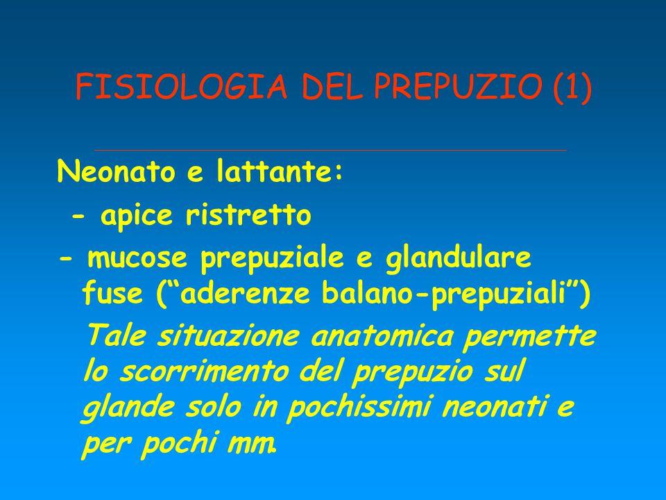 """FISIOLOGIA DEL PREPUZIO (1) Neonato e lattante: - apice ristretto - mucose prepuziale e glandulare fuse (""""aderenze balano-prepuziali"""") Tale situazione"""