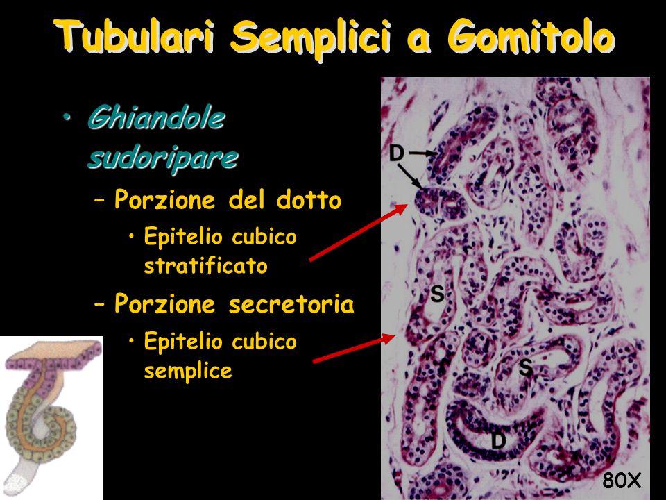 Tubulari Semplici a Gomitolo Ghiandole sudoripareGhiandole sudoripare –Porzione del dotto Epitelio cubico stratificato –Porzione secretoria Epitelio c