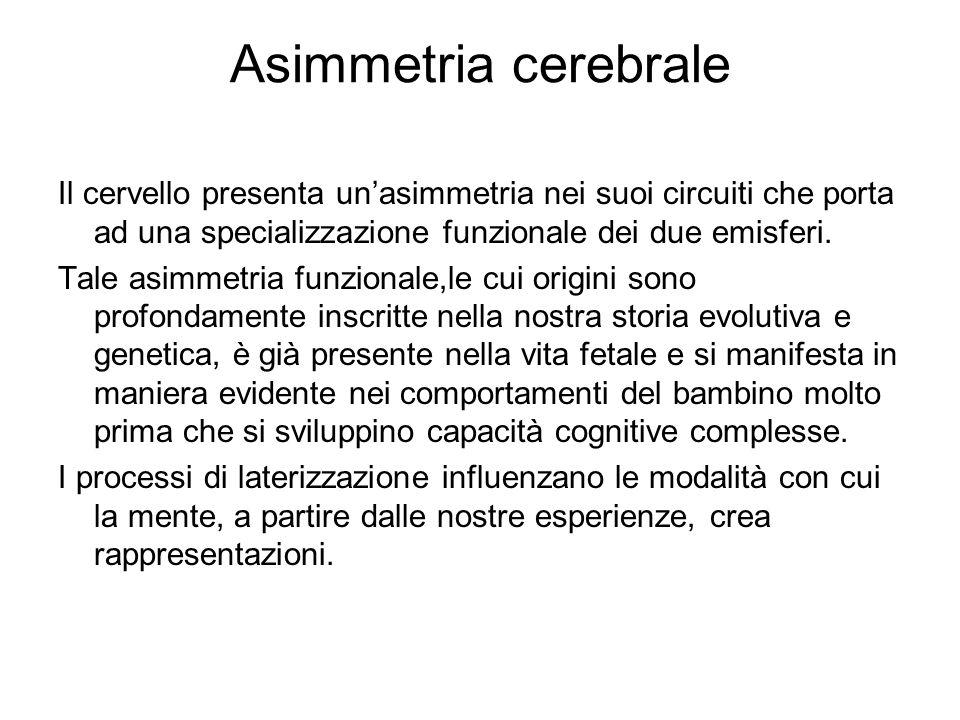 Asimmetria cerebrale Il cervello presenta un'asimmetria nei suoi circuiti che porta ad una specializzazione funzionale dei due emisferi. Tale asimmetr