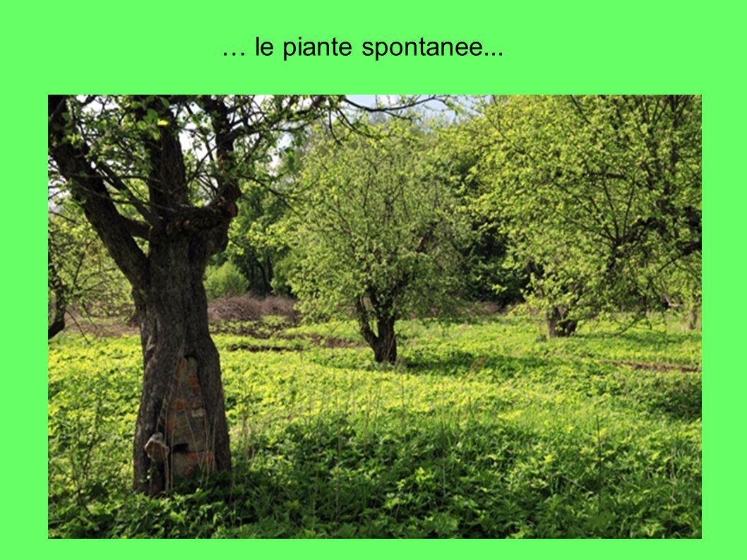 … le piante spontanee...
