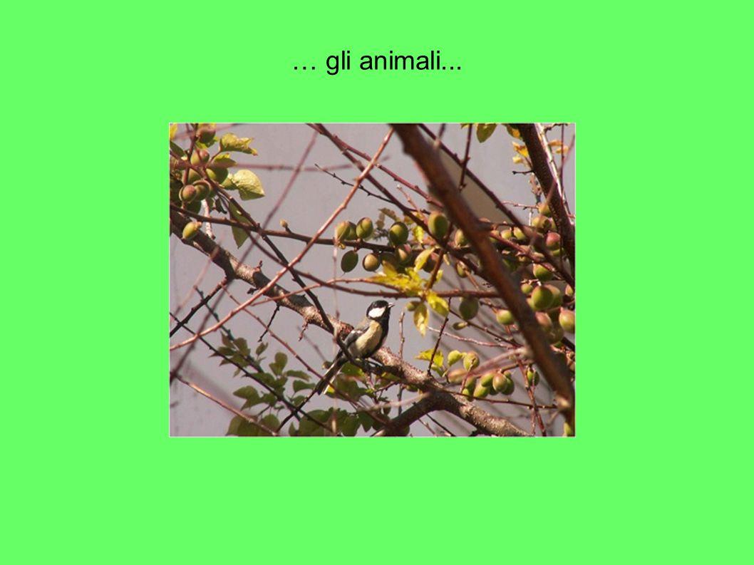 … gli animali...