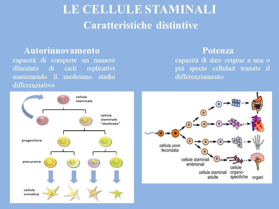 Caratteristiche distintive Autorinnovamento capacità di compiere un numero illimitato di cicli replicativi mantenendo il medesimo stadio differenziativo Potenza capacità di dare origine a una o più specie cellulari tramite il differenziamento LE CELLULE STAMINALI