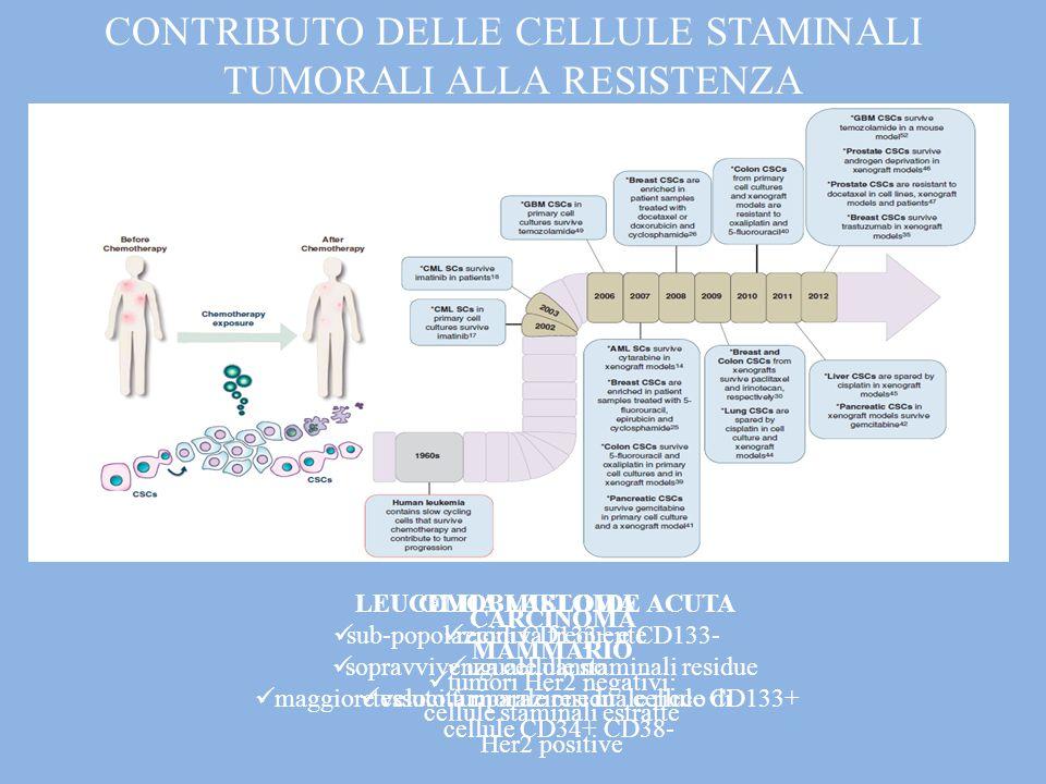 CONTRIBUTO DELLE CELLULE STAMINALI TUMORALI ALLA RESISTENZA GLIOBLASTOMA sub-popolazioni CD133+ e CD133- uguale danno maggiore velocità riparazione in cellule CD133+ LEUCEMIA MIELOIDE ACUTA recidiva frequente sopravvivenza cellule staminali residue tessuto tumorale residuale ricco di cellule CD34+ CD38- CARCINOMA MAMMARIO tumori Her2 negativi: cellule staminali estratte Her2 positive