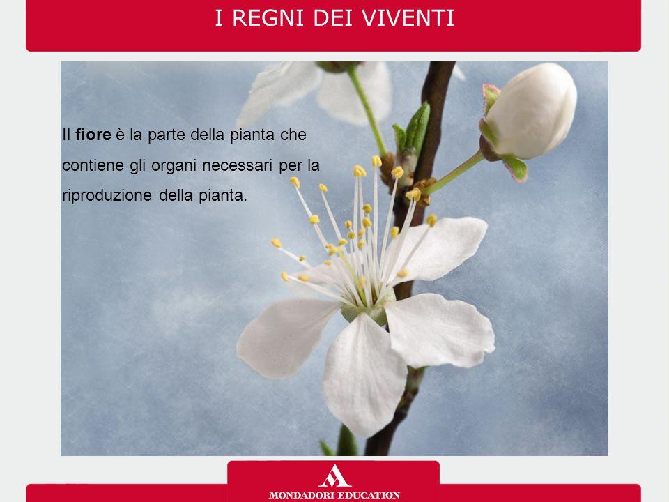I REGNI DEI VIVENTI Il fiore è la parte della pianta che contiene gli organi necessari per la riproduzione della pianta.