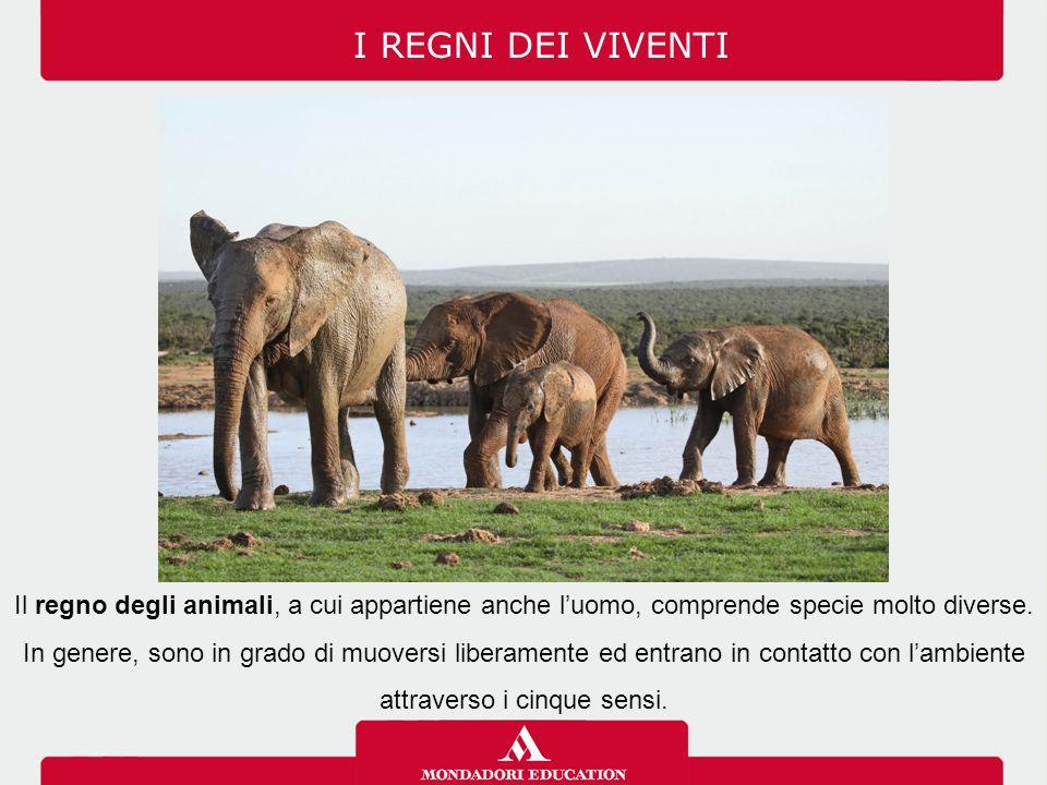 I REGNI DEI VIVENTI Il regno degli animali, a cui appartiene anche l'uomo, comprende specie molto diverse.
