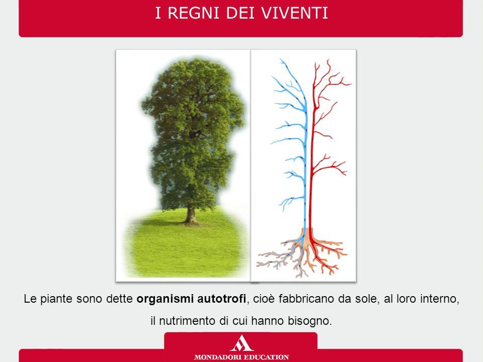 I REGNI DEI VIVENTI Le piante sono dette organismi autotrofi, cioè fabbricano da sole, al loro interno, il nutrimento di cui hanno bisogno.