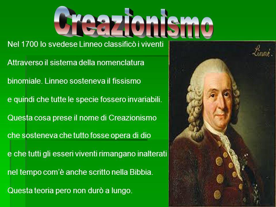 Nel 1700 lo svedese Linneo classificò i viventi Attraverso il sistema della nomenclatura binomiale. Linneo sosteneva il fissismo e quindi che tutte le
