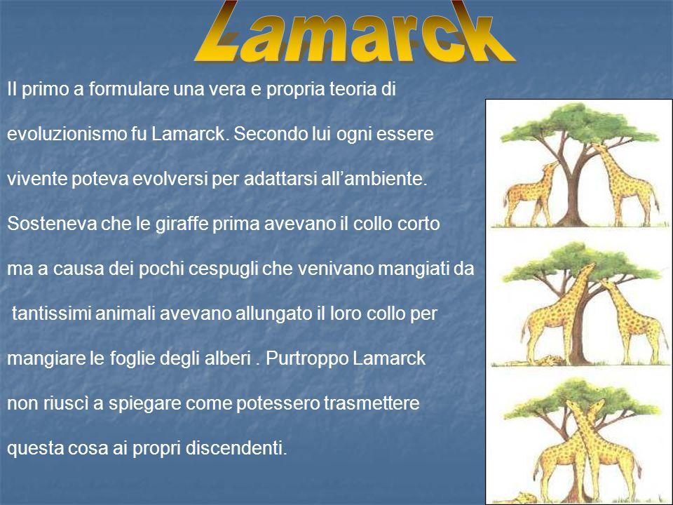 Il primo a formulare una vera e propria teoria di evoluzionismo fu Lamarck. Secondo lui ogni essere vivente poteva evolversi per adattarsi all'ambient