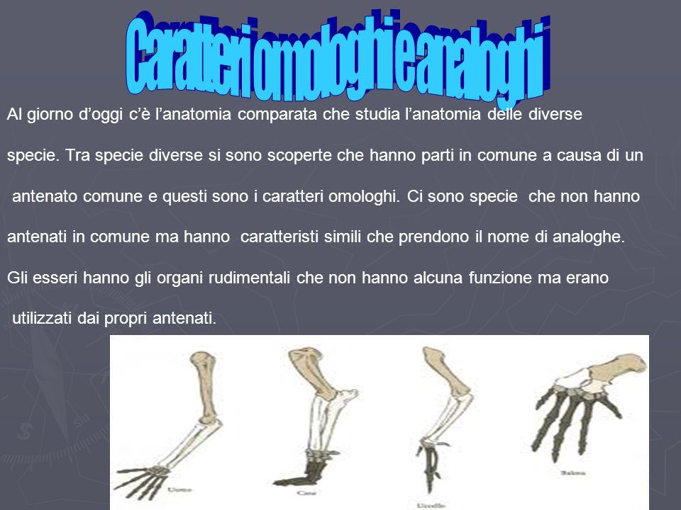 Al giorno d'oggi c'è l'anatomia comparata che studia l'anatomia delle diverse specie. Tra specie diverse si sono scoperte che hanno parti in comune a