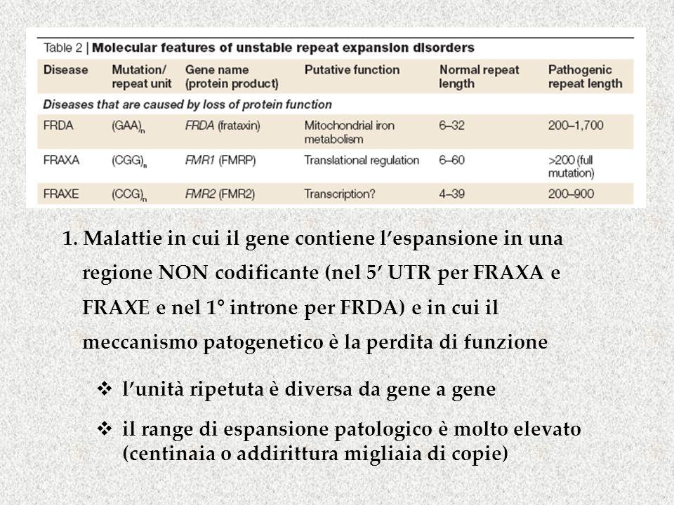 1. Malattie in cui il gene contiene l'espansione in una regione NON codificante (nel 5' UTR per FRAXA e FRAXE e nel 1° introne per FRDA) e in cui il m