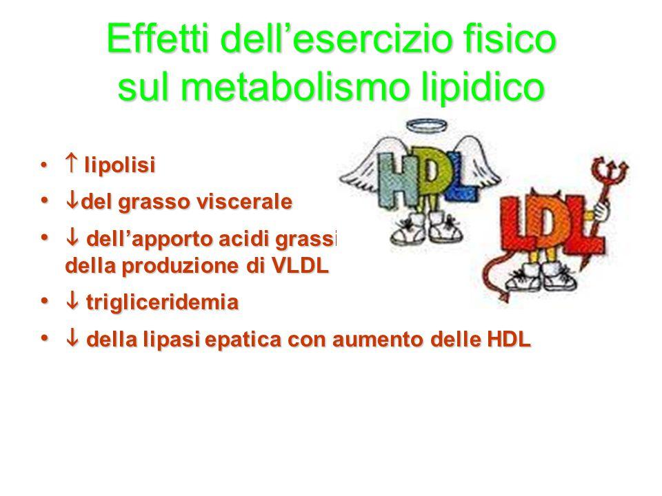 Effetti dell'esercizio fisico sul metabolismo lipidico  lipolisi  lipolisi  del grasso viscerale  del grasso viscerale  dell'apporto acidi grassi
