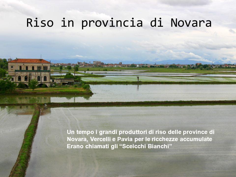 Riso in provincia di Novara Un tempo i grandi produttori di riso delle province di Novara, Vercelli e Pavia per le ricchezze accumulate Erano chiamati