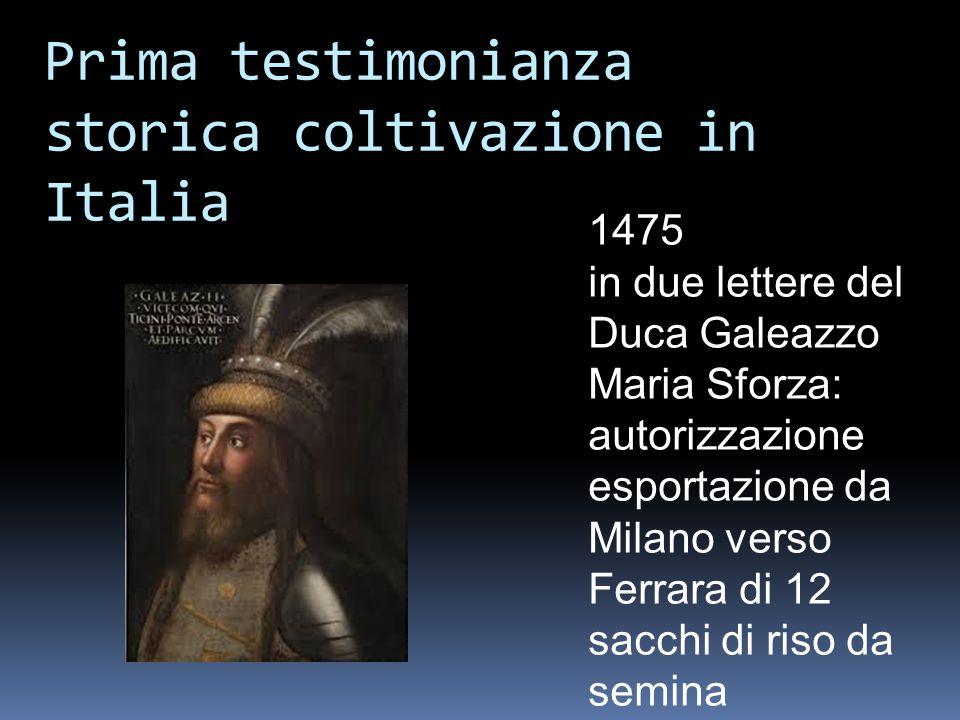 Prima testimonianza storica coltivazione in Italia 1475 in due lettere del Duca Galeazzo Maria Sforza: autorizzazione esportazione da Milano verso Fer
