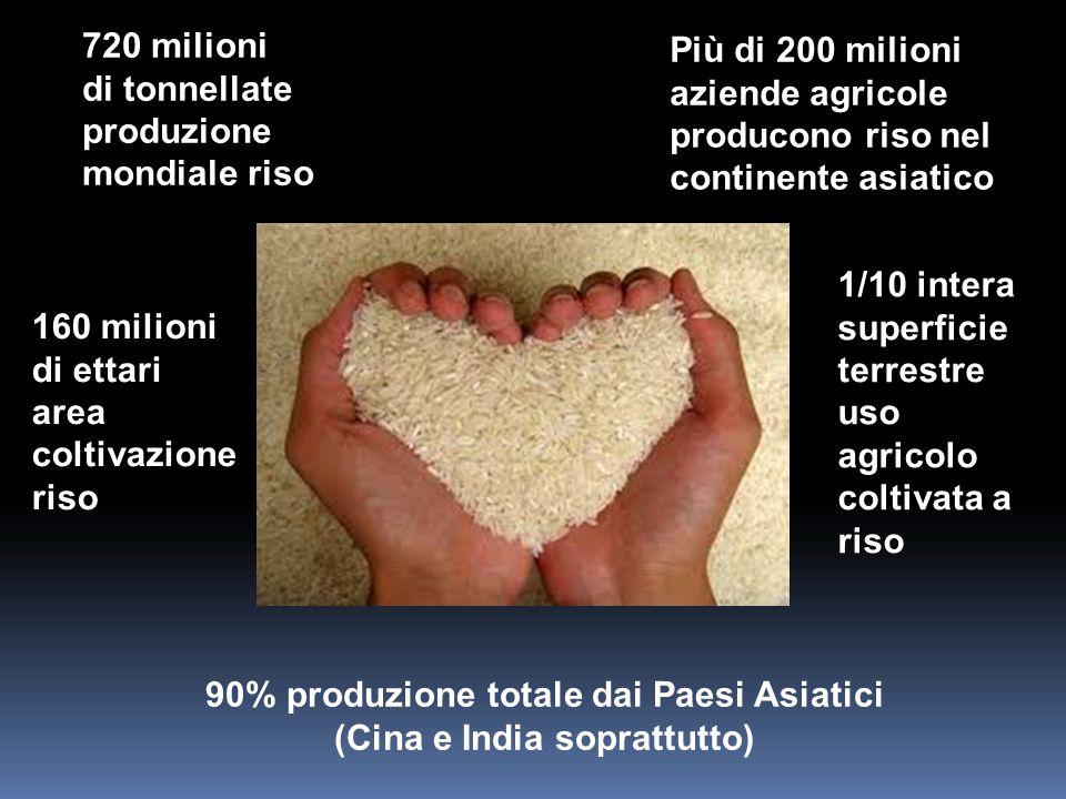 720 milioni di tonnellate produzione mondiale riso 90% produzione totale dai Paesi Asiatici (Cina e India soprattutto) 160 milioni di ettari area colt