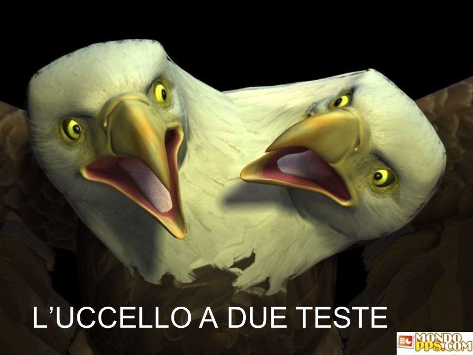 L'UCCELLO A DUE TESTE