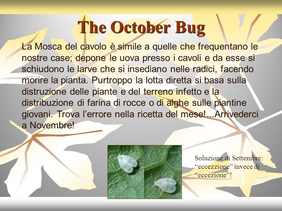 The October Bug La Mosca del cavolo è simile a quelle che frequentano le nostre case; depone le uova presso i cavoli e da esse si schiudono le larve che si insediano nelle radici, facendo morire la pianta.