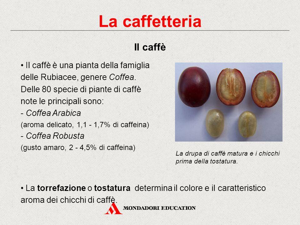 Il caffè è una pianta della famiglia delle Rubiacee, genere Coffea.