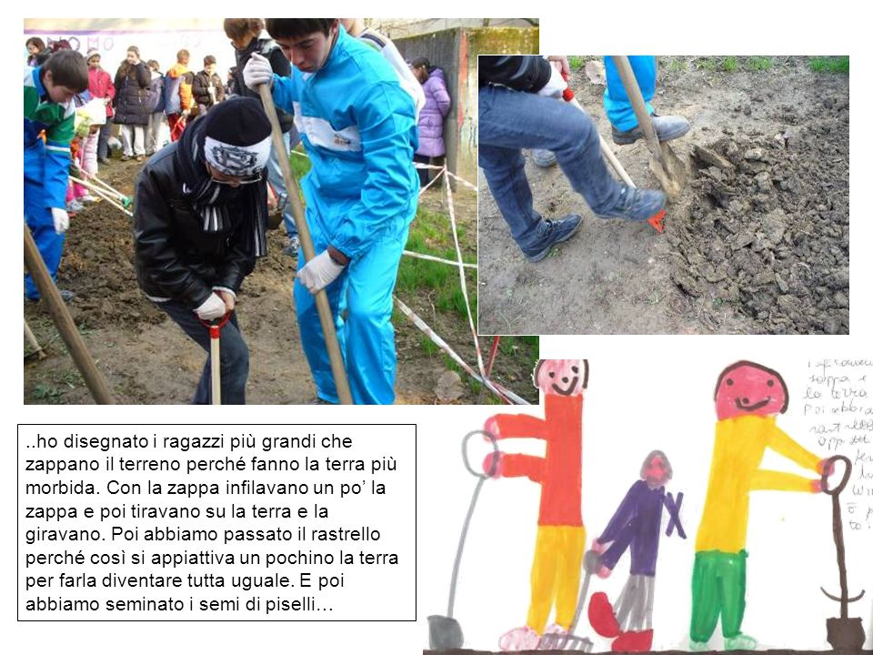 ..ho disegnato i ragazzi più grandi che zappano il terreno perché fanno la terra più morbida.