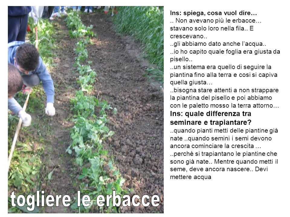 Ins: spiega, cosa vuol dire…..Non avevano più le erbacce… stavano solo loro nella fila..