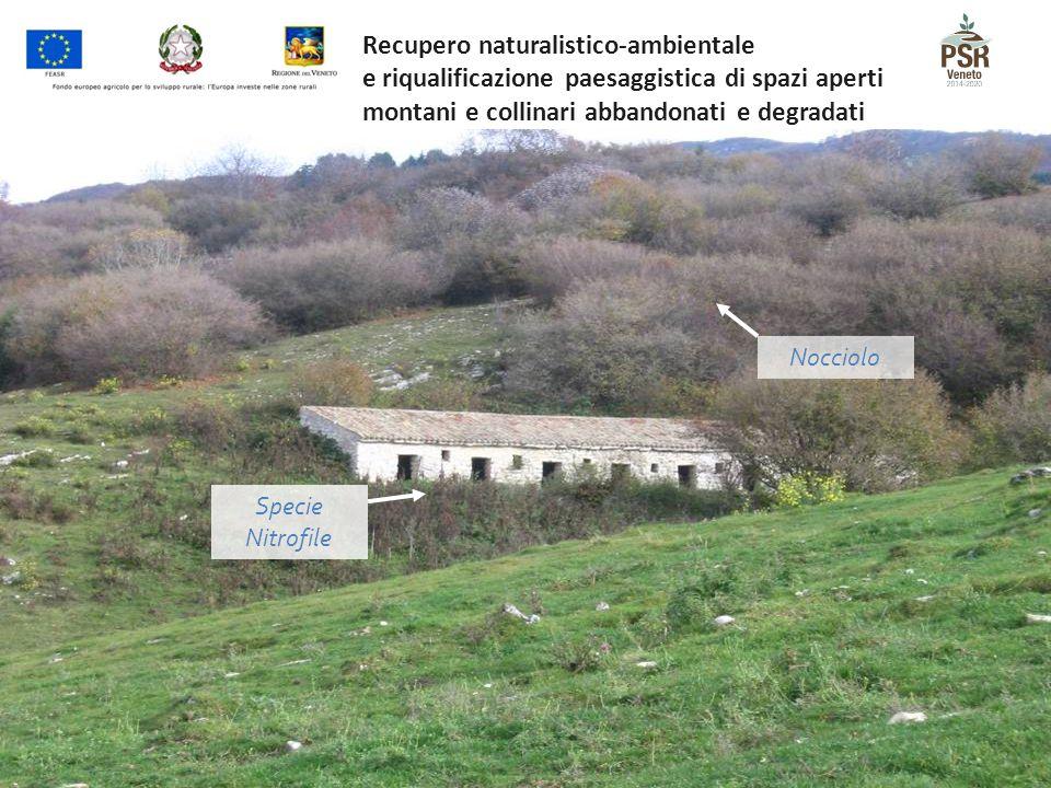 Nocciolo Specie Nitrofile Recupero naturalistico-ambientale e riqualificazione paesaggistica di spazi aperti montani e collinari abbandonati e degrada