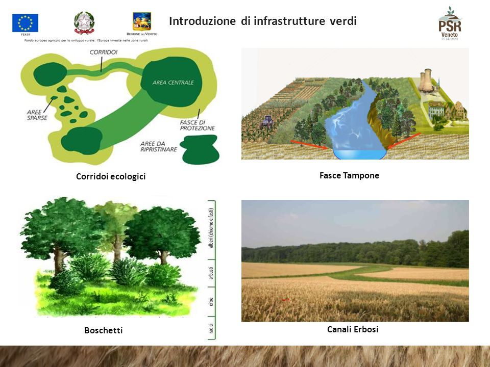 Corridoi ecologici Fasce Tampone Canali Erbosi Boschetti Introduzione di infrastrutture verdi