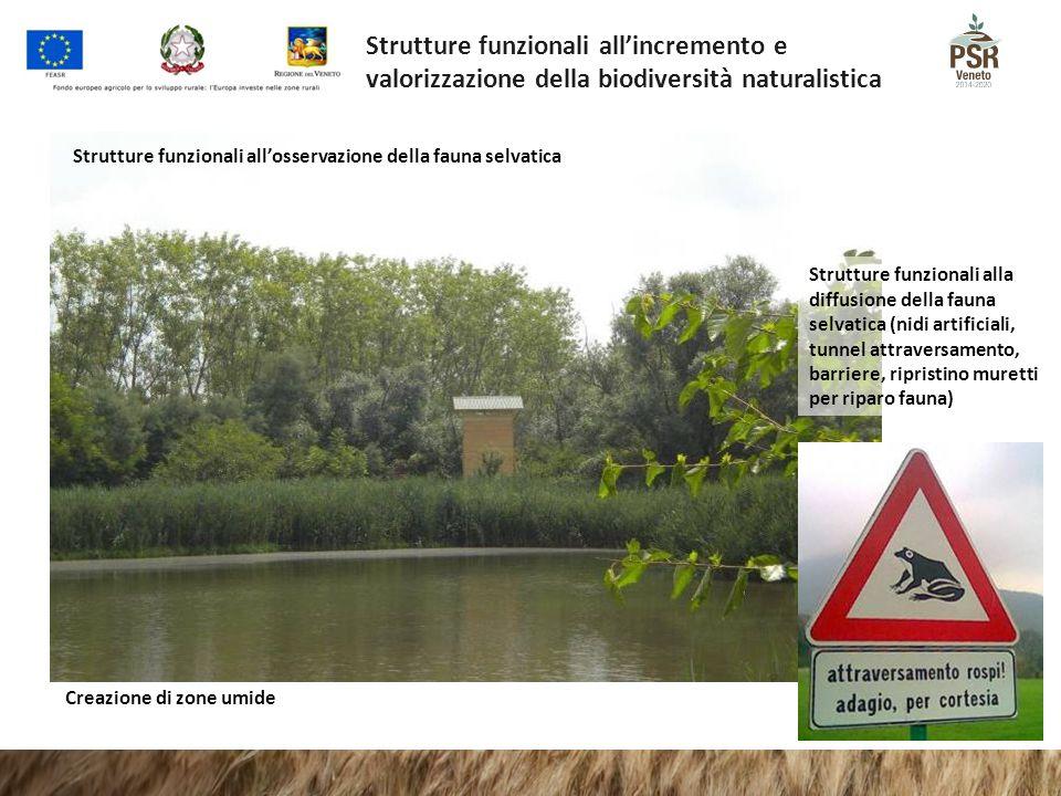 Strutture funzionali all'incremento e valorizzazione della biodiversità naturalistica Strutture funzionali all'osservazione della fauna selvatica Crea