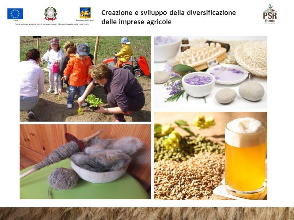 Creazione e sviluppo della diversificazione delle imprese agricole