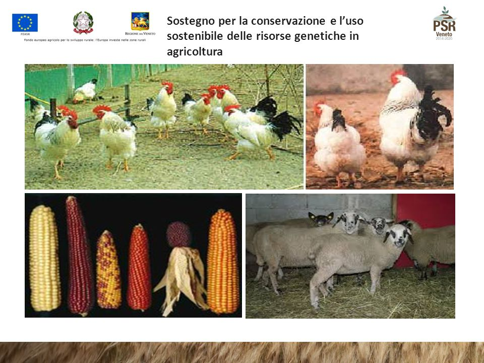 Sostegno per la conservazione e l'uso sostenibile delle risorse genetiche in agricoltura