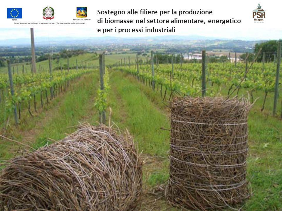 Sostegno alle filiere per la produzione di biomasse nel settore alimentare, energetico e per i processi industriali