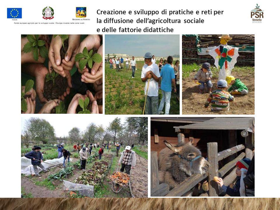 Creazione e sviluppo di pratiche e reti per la diffusione dell'agricoltura sociale e delle fattorie didattiche