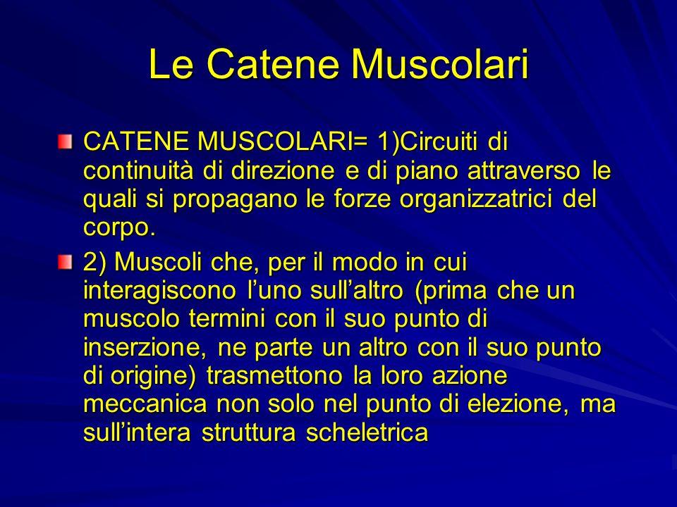 Cosa sono le catene muscolari?