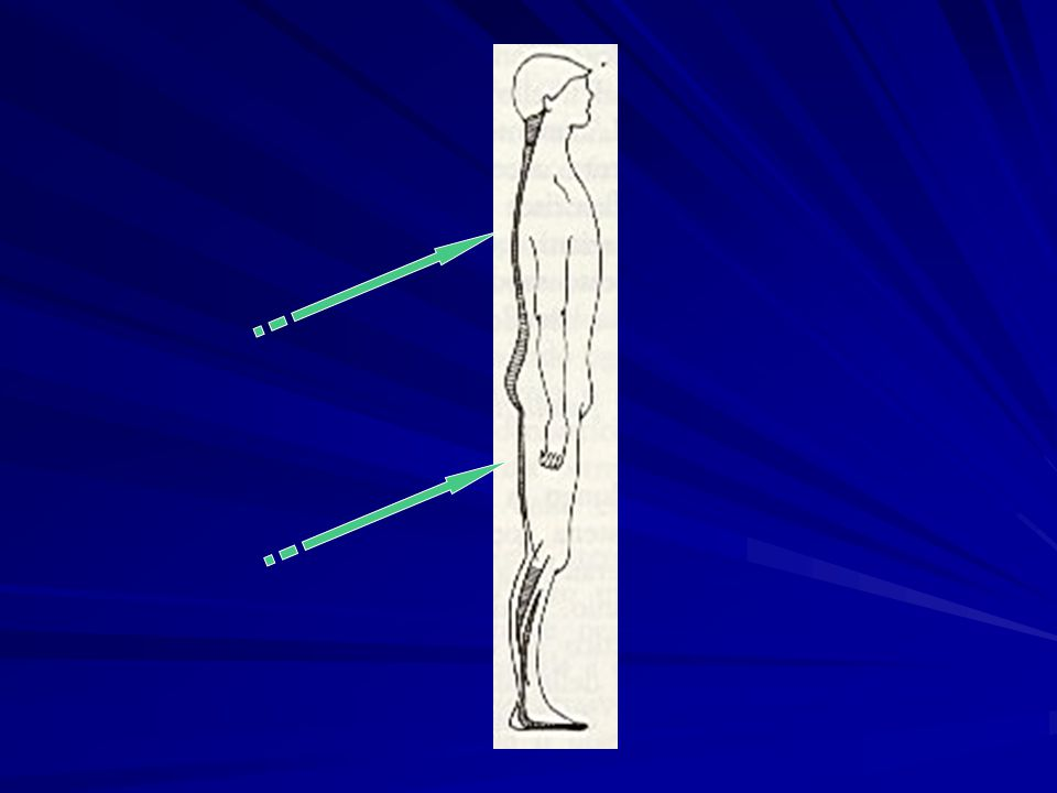 Le Catene Muscolari CATENE MUSCOLARI= 1)Circuiti di continuità di direzione e di piano attraverso le quali si propagano le forze organizzatrici del corpo.
