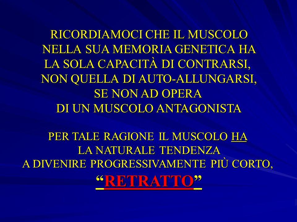 Il muscolo L'unità funzionale: il sarcomero . Muscoli Agonisti-Antagonisti- Freno .