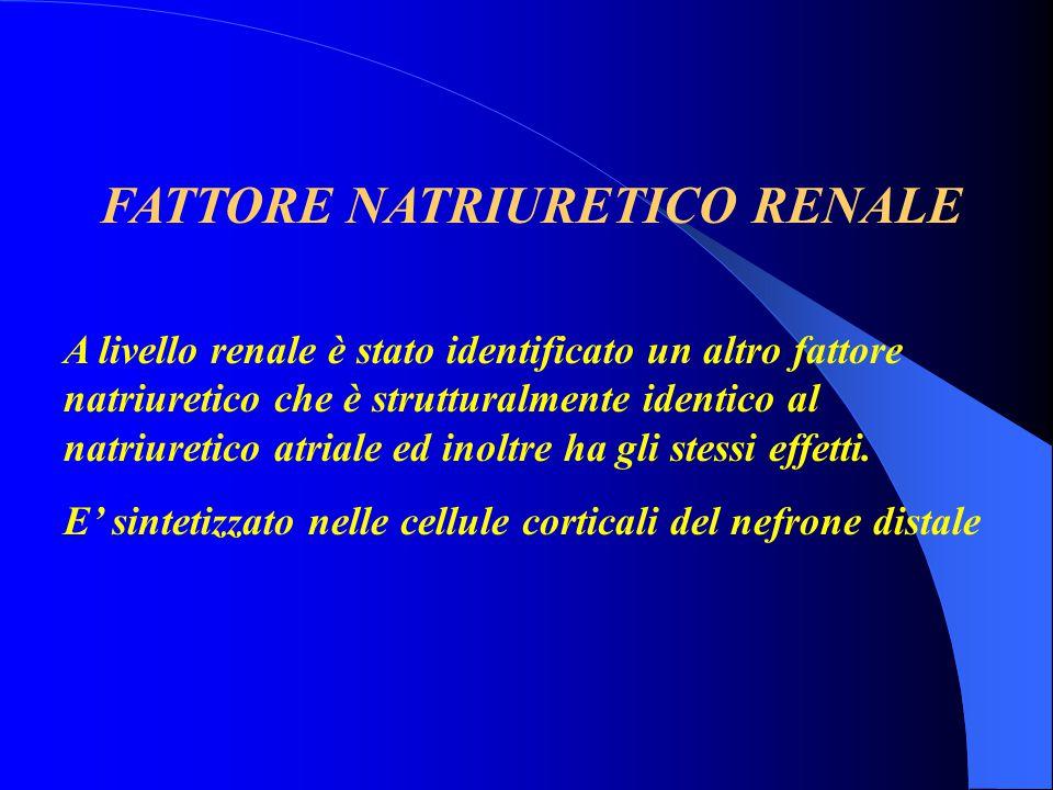 FATTORE NATRIURETICO RENALE A livello renale è stato identificato un altro fattore natriuretico che è strutturalmente identico al natriuretico atriale
