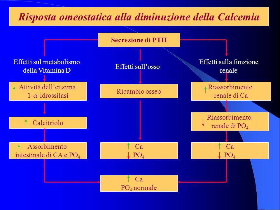 Risposta omeostatica alla diminuzione della Calcemia Secrezione di PTH Attività dell'enzima 1- a -idrossilasi Calcitriolo Assorbimento intestinale di