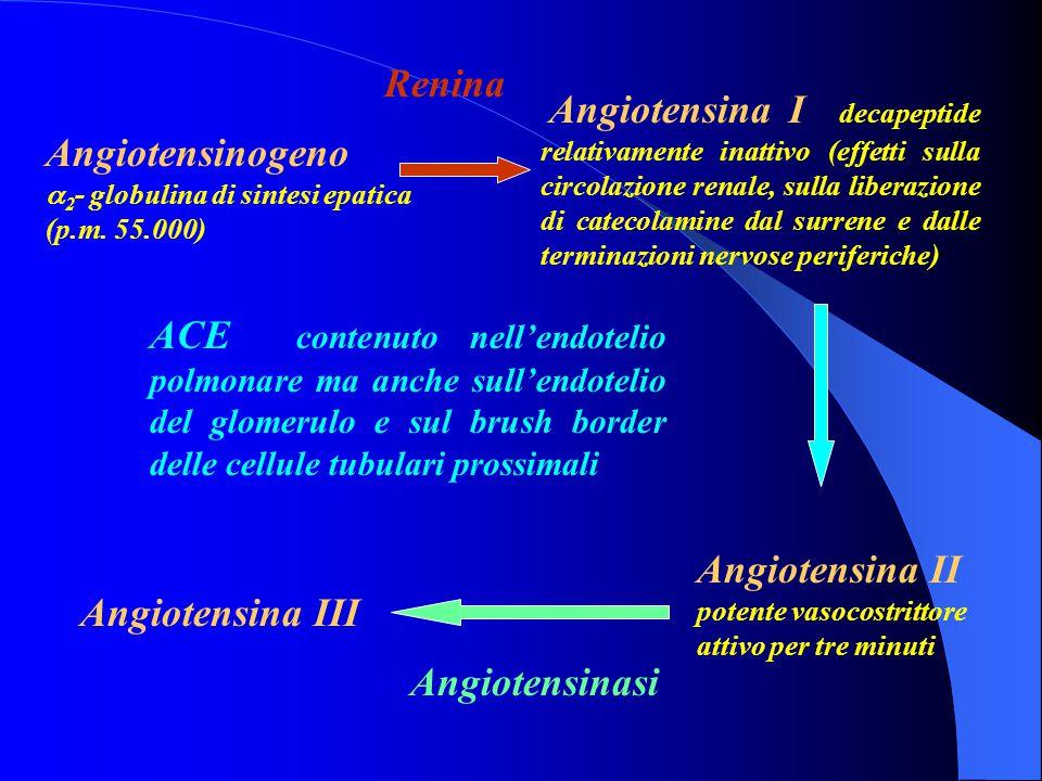 Angiotensinogeno a 2 - globulina di sintesi epatica (p.m. 55.000) Angiotensina I decapeptide relativamente inattivo (effetti sulla circolazione renale