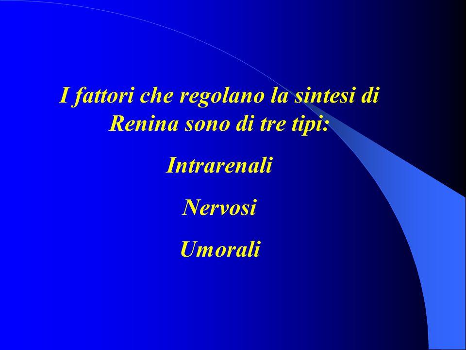 I fattori che regolano la sintesi di Renina sono di tre tipi: Intrarenali Nervosi Umorali