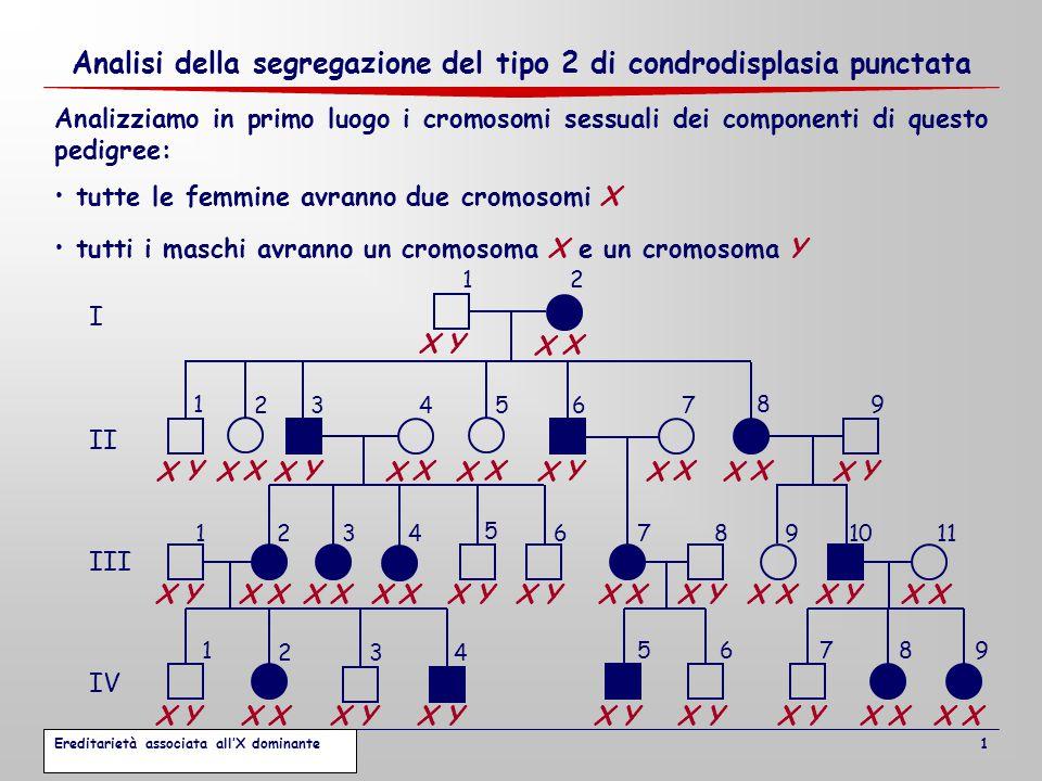 Analisi della segregazione del tipo 2 di condrodisplasia punctata 1 Analizziamo in primo luogo i cromosomi sessuali dei componenti di questo pedigree: tutte le femmine avranno due cromosomi X tutti i maschi avranno un cromosoma X e un cromosoma Y X X X Y X X X X X X X X X X X X X X X X X X X X X X X X X X X X X Y X Y X Y X Y X Y X Y X Y X Y X Y X Y X Y X Y X Y X Y X Y Ereditarietà associata all'X dominante