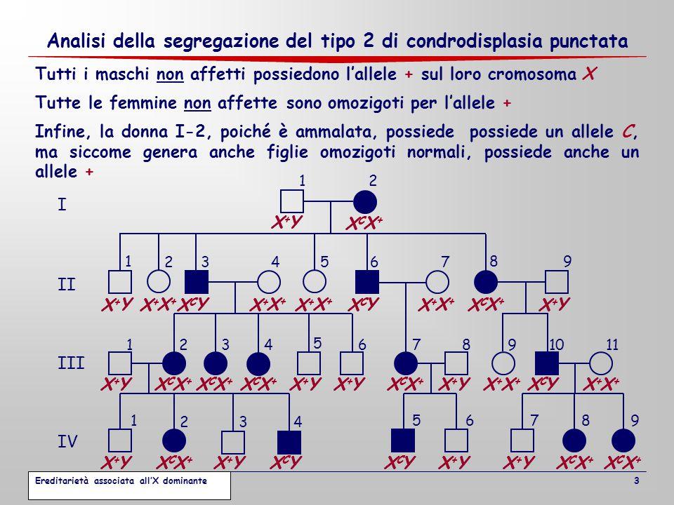 Analisi della segregazione del tipo 2 di condrodisplasia punctata 3 12 I II III IV 3467 1234 5 67891011 1 2 5679 89 34 1 5 2 8 X X X Y X X X X X X X X X X X X X X X X X X X X X X X X X X X X X Y X Y X Y X Y X Y X Y X Y X Y X Y X Y X Y X Y X Y X Y X Y Tutte le femmine non affette sono omozigoti per l'allele + Tutti i maschi non affetti possiedono l'allele + sul loro cromosoma X Infine, la donna I-2, poiché è ammalata, possiede possiede un allele C, ma siccome genera anche figlie omozigoti normali, possiede anche un allele + XCXC Y XCXC Y XCXC Y XCXC Y XCXC Y XCXC X+X+ XCXC X+X+ XCXC X+X+ XCXC X+X+ XCXC X+X+ XCXC X+X+ XCXC X+X+ XCXC X+X+ X+X+ Y X+X+ Y X+X+ Y X+X+ Y X+X+ Y X+X+ Y X+X+ Y X+X+ Y X+X+ Y X+X+ Y X+X+ Y X+X+ X+X+ X+X+ X+X+ X+X+ X+X+ X+X+ X+X+ X+X+ X+X+ X+X+ X+X+ XCXC X+X+ Ereditarietà associata all'X dominante