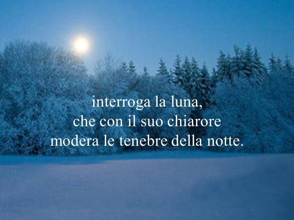 Interroga la bellezza del cielo, interroga l'ordine delle stelle, interroga il sole che col suo splendore rischiara il giorno; interroga la luna, che con il suo chiarore modera le tenebre della notte.
