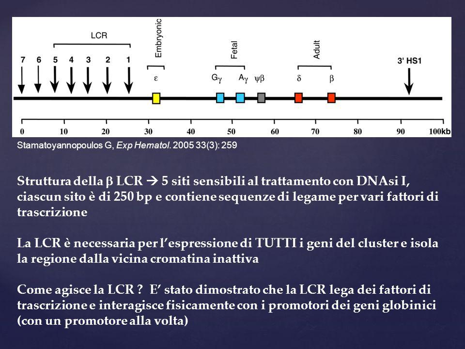 Struttura della  LCR  5 siti sensibili al trattamento con DNAsi I, ciascun sito è di 250 bp e contiene sequenze di legame per vari fattori di trascr